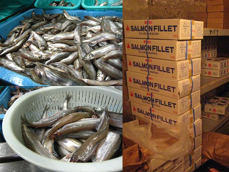 大食いのペンギンたちの餌になる魚の写真 「ペンギンの飼い方」組立通信LLC.